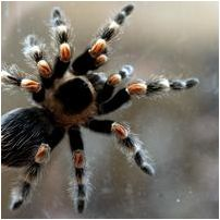 library-spider
